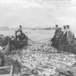 The good old days of the fishing economy off the Grand Bank.