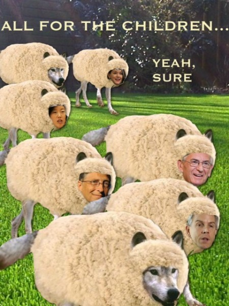 education sheep